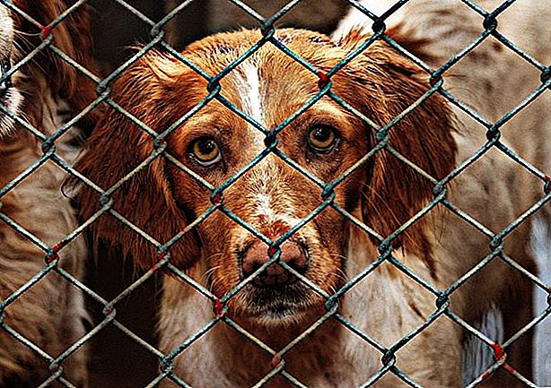 FDA: Evanger's Can't Donate Recalled Dog Food To Shelters