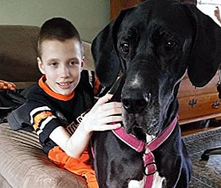 Pet Scoop: Great Dane Membantu Boy Walk Again, Dog Missing for Two Years ditemukan oleh Chance
