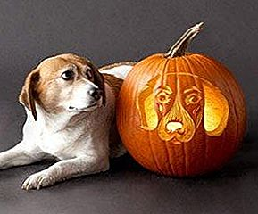10 Astonishing Dog Pumpkin Carvings